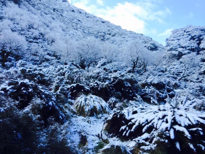 Routeburn Track snow